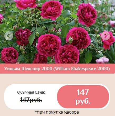 Как заказать роза кордана уход в домашних условиях