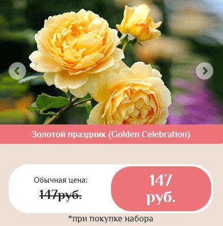 гибридные королевские розы купить в Подольске